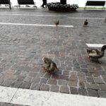 """Es gibt """"Verkehr"""" außerhalb der Altstadt"""