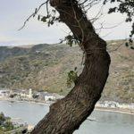 Ein Baum als mahnender Finger