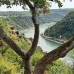 Staunende Bäume blicken auf den Rhein